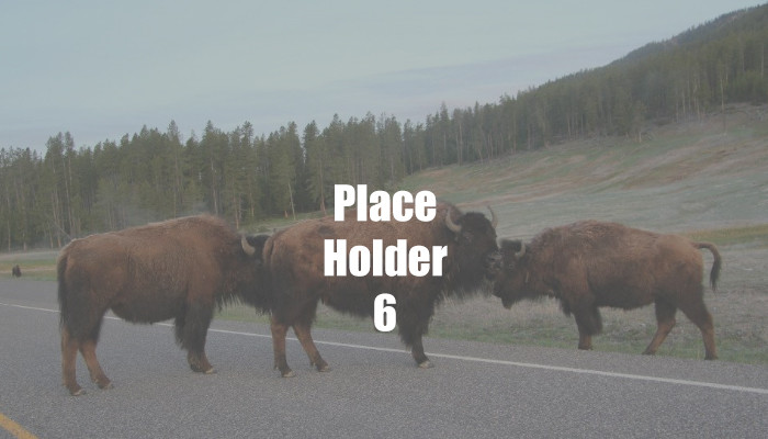 Place-Holder 6